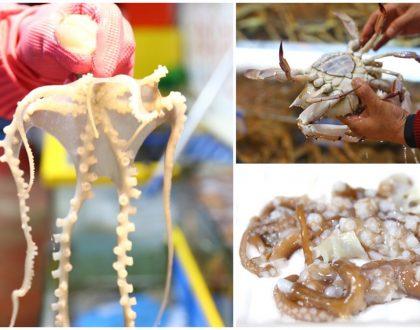 Noryangjin Fish Market - One Of Korea's Largest Seafood Markets, Freshest Seafood & Live Octopus Sashimi In Seoul