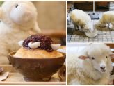 Thanks Nature Café - Sheep Cafe at Hongdae Seoul, For A Baa-Baa-ry Good Time